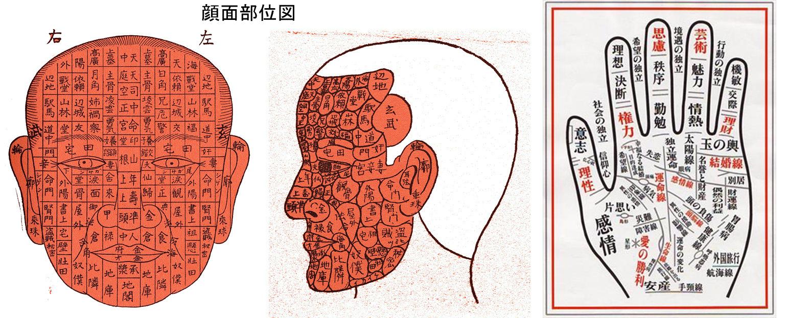 顔面部位図